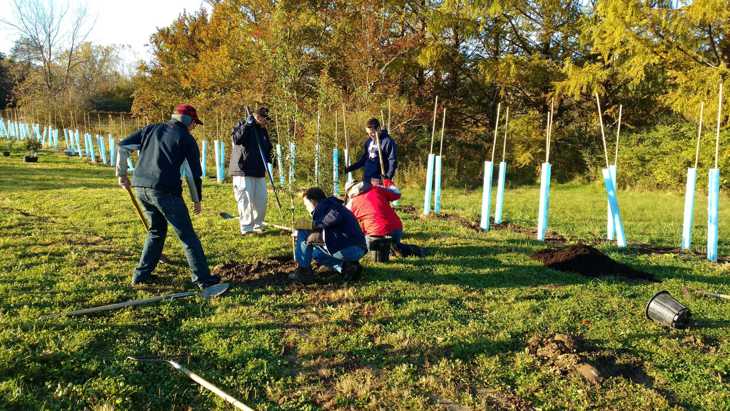 October 2018 planting at Walter Meyers Nursery.  A Citizen Forester demonstrates planting technique to a group of volunteers.