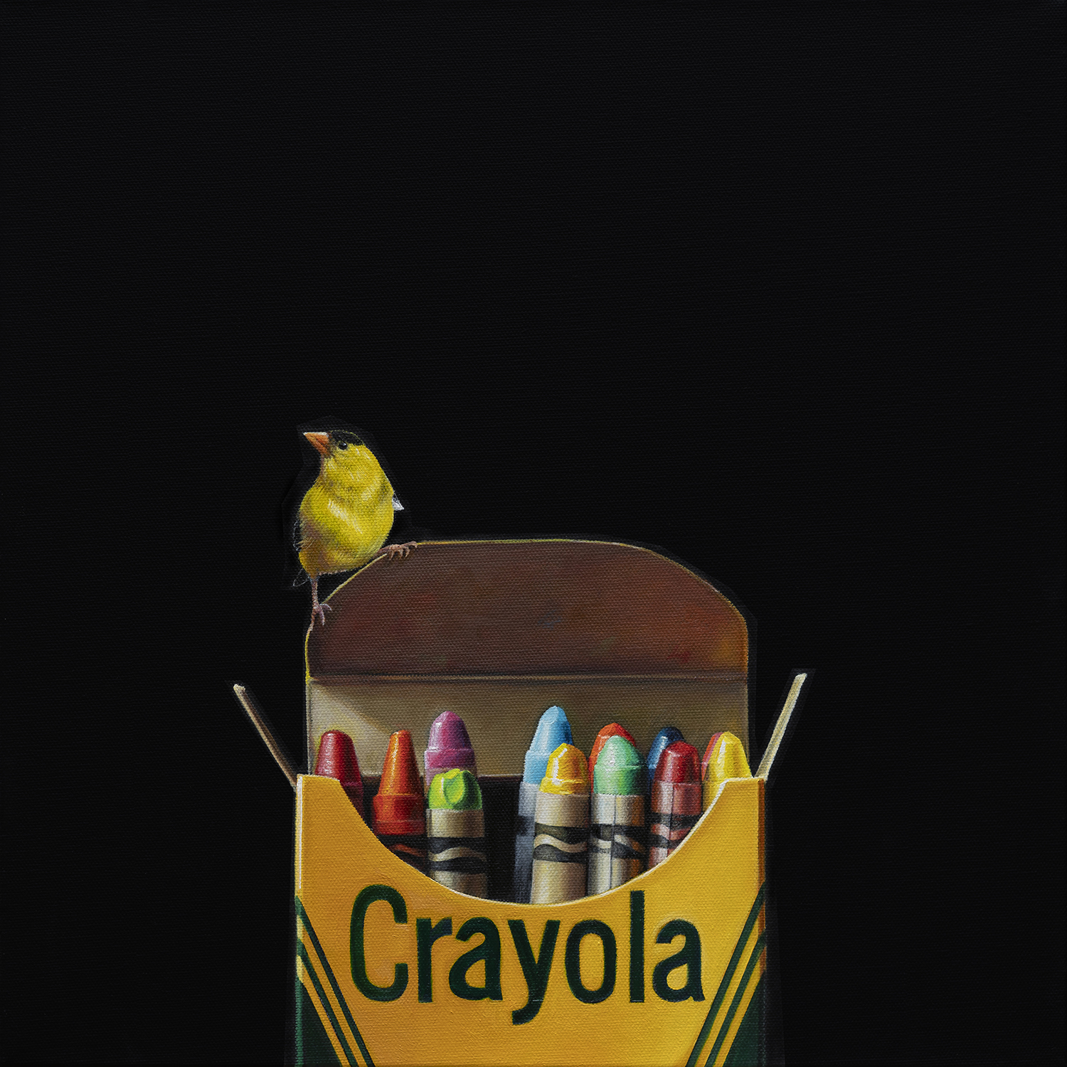 Crayola with Goldfinch | 16 x 16 | Oil on canvas