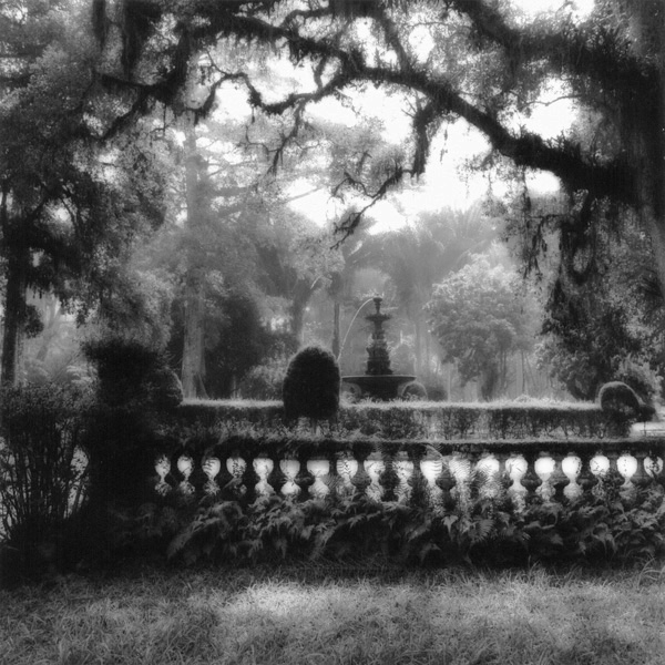 Rio, Botanical Garden #3. 1986