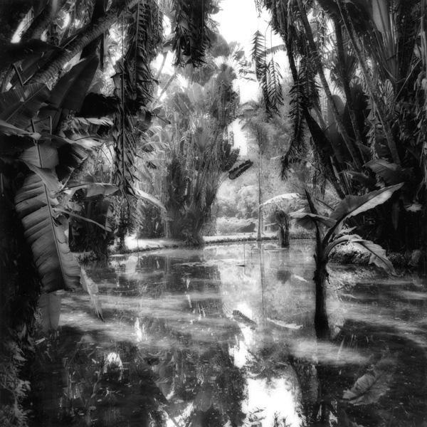 Rio, Botanical Garden #1, 1986