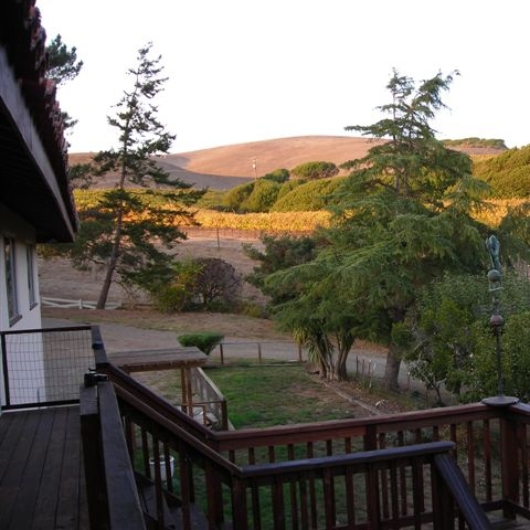 Point Reyes Vineyards  - The Point Reyes Vineyard Inn is a romantic, secluded Mediterranean-style Bed and Breakfast in a quiet pastoral setting with views of the Inverness Ridge and West Marin's rolling hills.