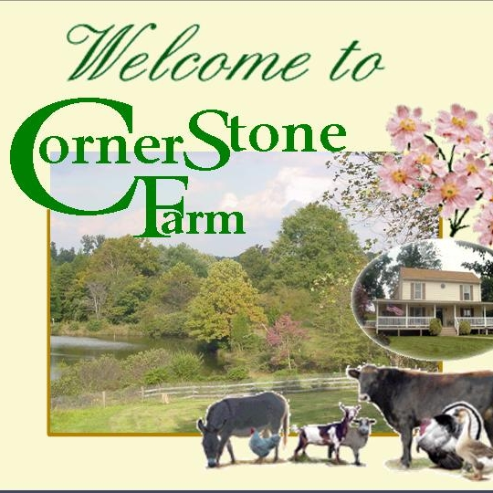 Cornerstone B&B AgroBnB  - Opened in 2004, our unique AgroBnB has become a favorite. We offer many family-centered packages with on-site amenities that are both educational and fun!