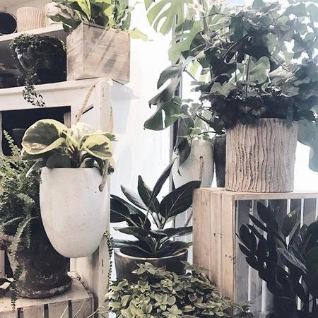 plants x pots -