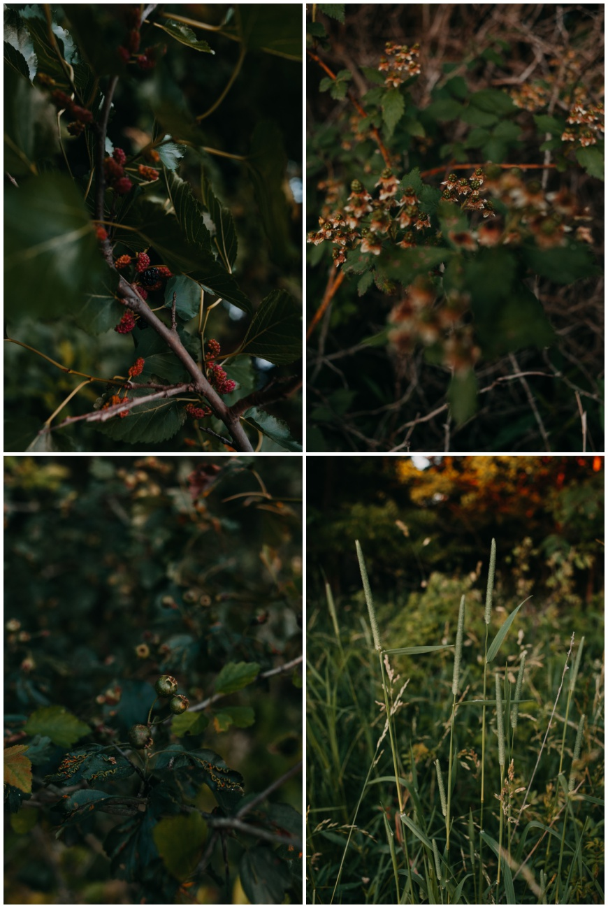 Nature Around Iowa | Iowa Nature, Iowa Nature Photography, Iowa Photography,
