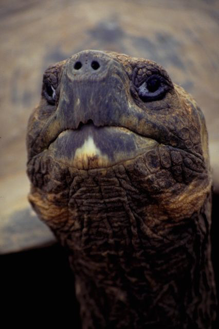 Turtle with green head.jpg