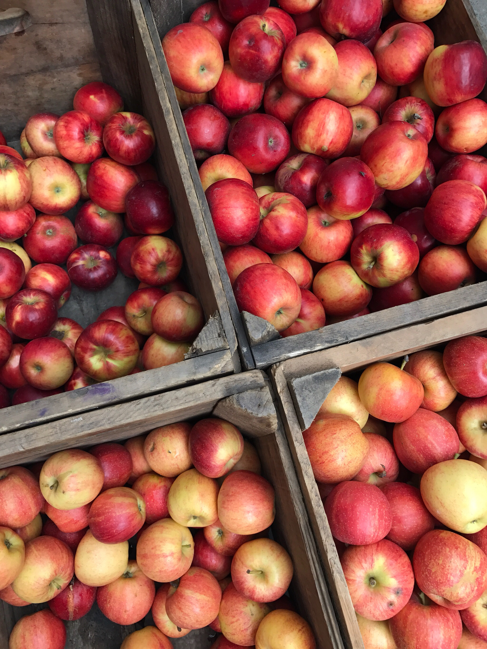FRESH APPLES (Union Square Farmers Market)