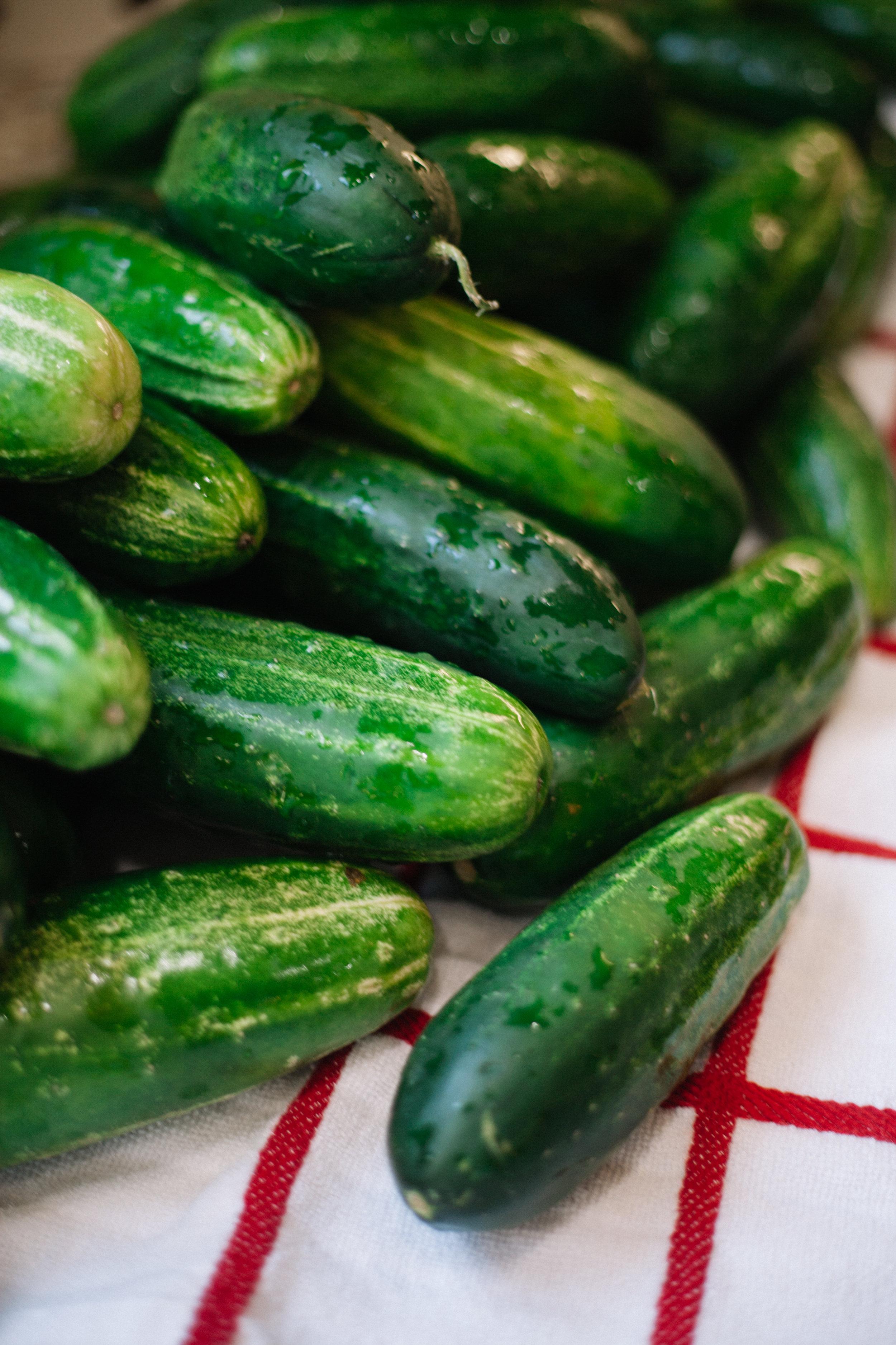 Bread + Butter Pickles (V + GF)   Marina Gunn