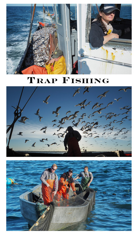 Trap Fishing.jpg