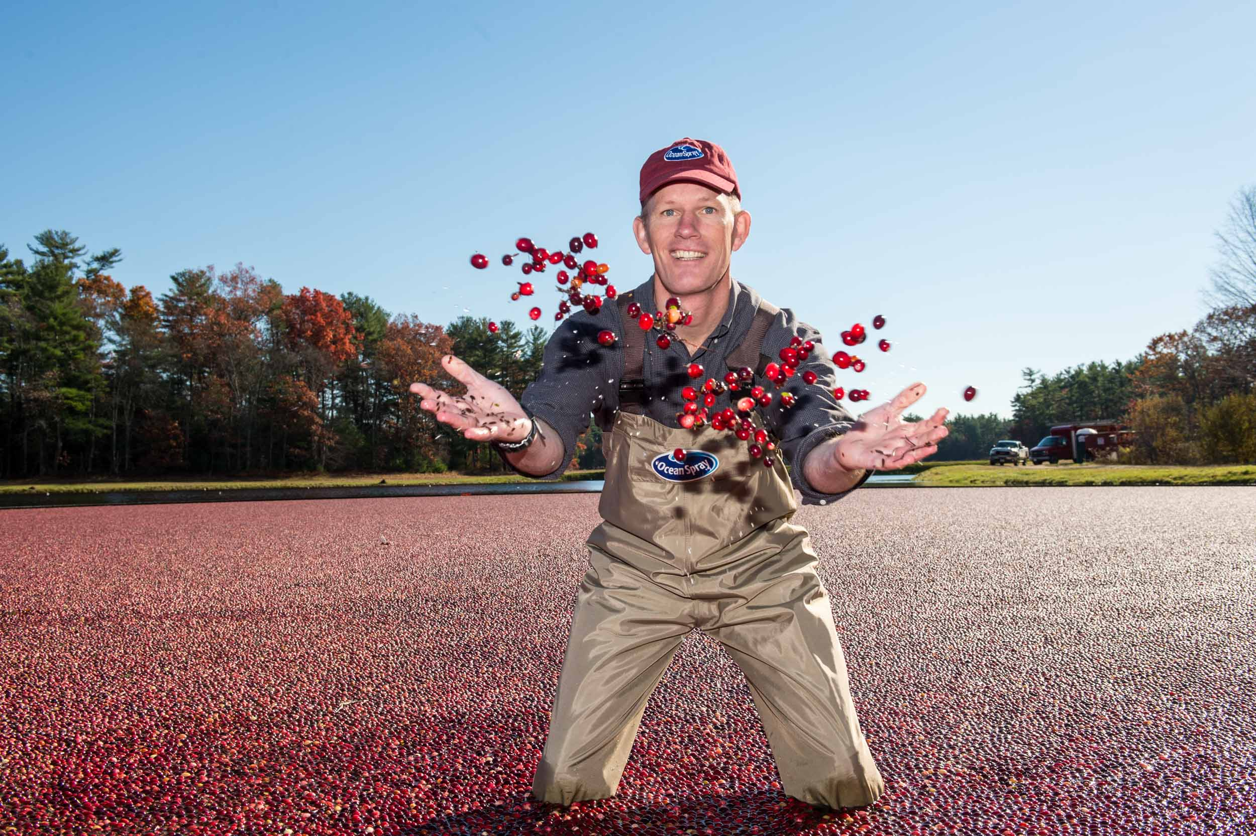 Maura Wayman Photography, Photography, Corporate Photography,Massachusetts, Boston, Metro West, events, Corporate events, Photographer, Functions, Parties, Fundraisers, Ocean Spray, Bogs, cranberries, cranberry, waders, walking in a bog, Corproate Team building, tossing berries, fruit, red,