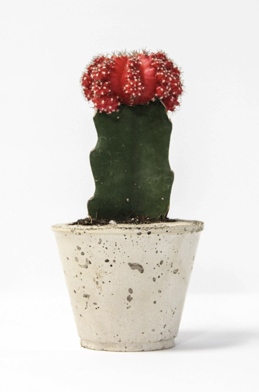 CACTUSCUP.png