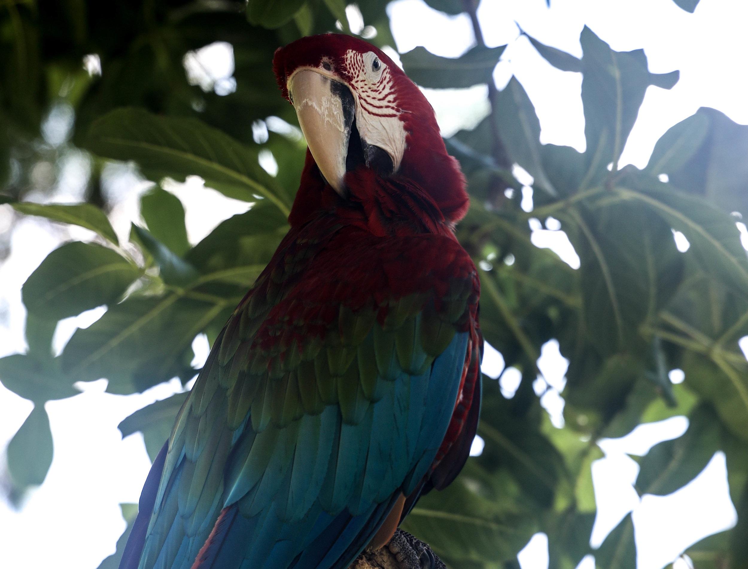 PRETTYBIRD1.jpg