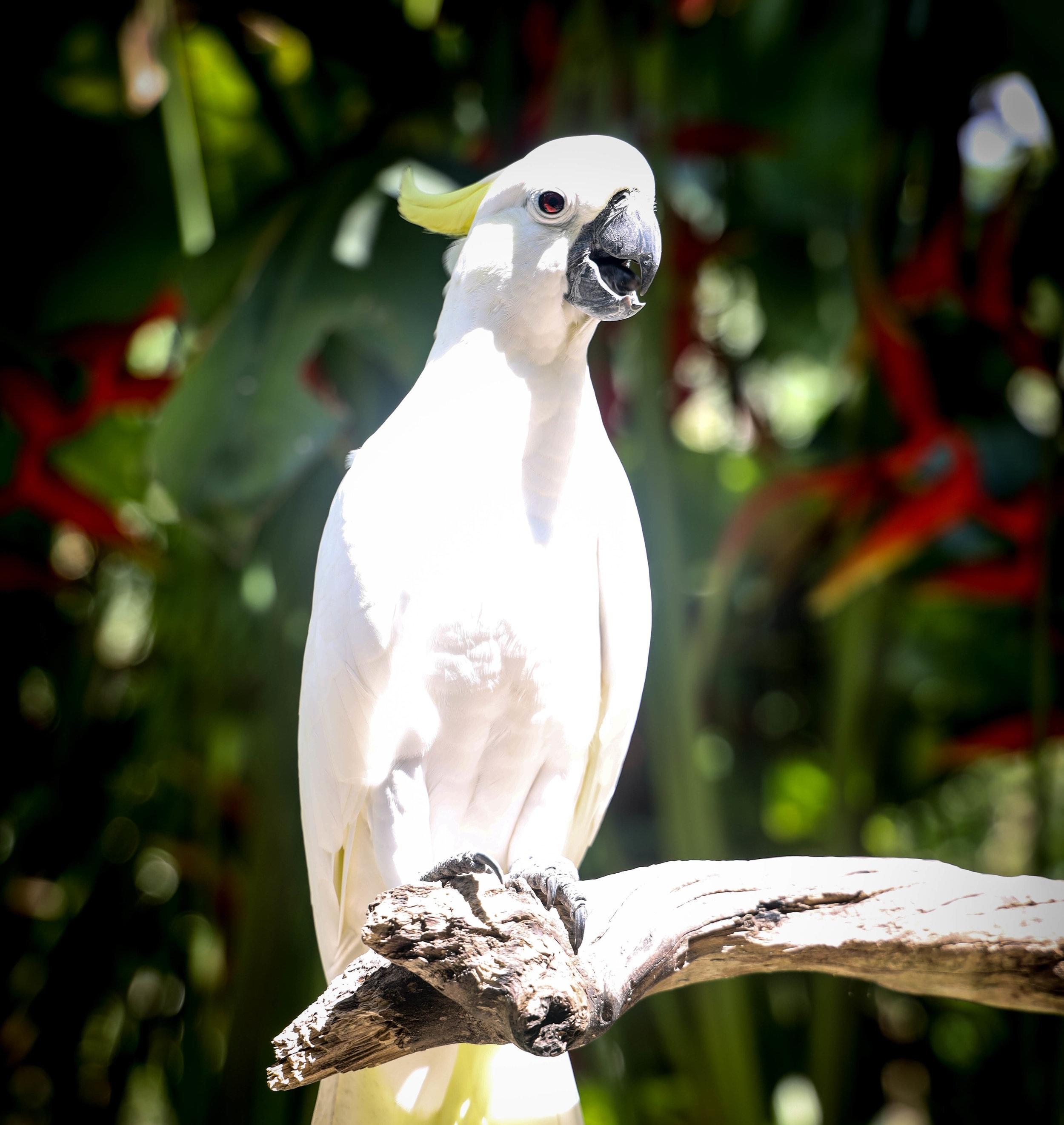 WHITEBIRD.jpg