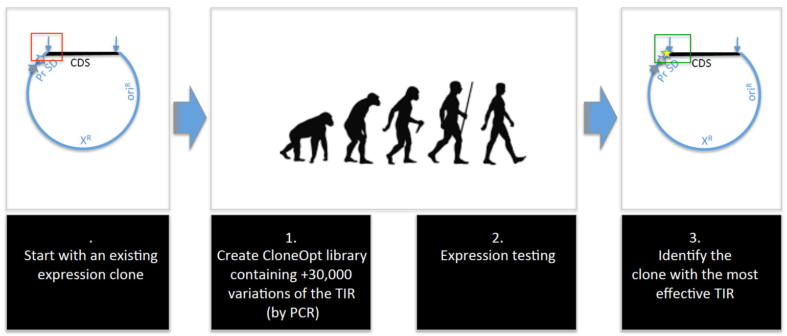 Figure 2. CloneOpt synthetically evolves TIRs on expression clones .