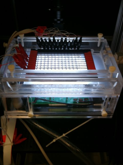 Schier Lab: The chamber shown allows machine vision software to provide an addressable, controlled, mild, electrical stimulus to each of 96 wells containing a larval zebra fish. By tickling the fish in this manner, the Schier lab can explore the effects of altered sleep patterns on behavior.
