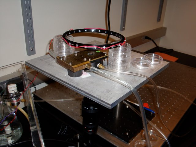 Zhang Lab: Equipment for measuring the turning behavior of C. elegans in the presence of odorants. The leftmost hose maintains stage temperature while the right hose delivers odor laden air to a chamber that houses the worm suspended in a hanging water droplet. Responses are recorded by the camera underneath.