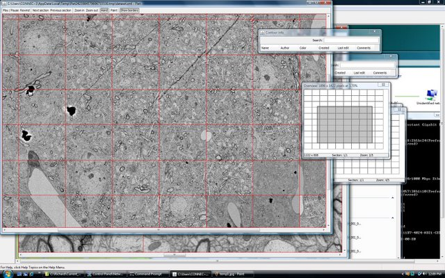 Lichtman Lab: Working with Duncan Mak, we created software capable of visualizing nearly boundless amounts of data. While many excellent commercial programs exist (Photoshop, Image J, etc.) most can not handle the 100's of Gigabytes of data that are required by the Connectome. Red lines delineate individual overlapping 20Mpixel images that are part of a much larger sheet.
