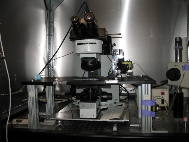 Meister Lab: This Olympus microscope has been modified to allow for patch clamp recordings from retinal ganglion cells. The stage has been replaced with a stable fixed table onto which the preparation and manipulator are mounted. Translating the F.O.V. is accomplished by moving the microscope.
