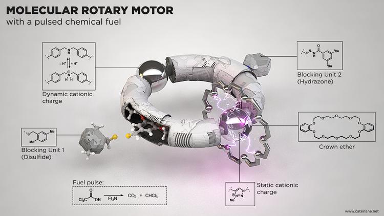 02_molecular_motor_[2]catenane.png
