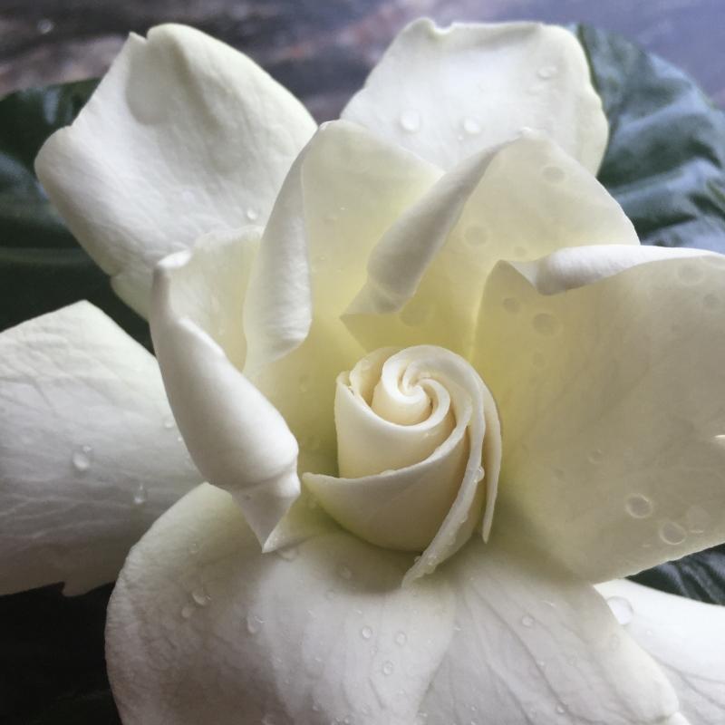 Journal-Keeping-flower-gardenia
