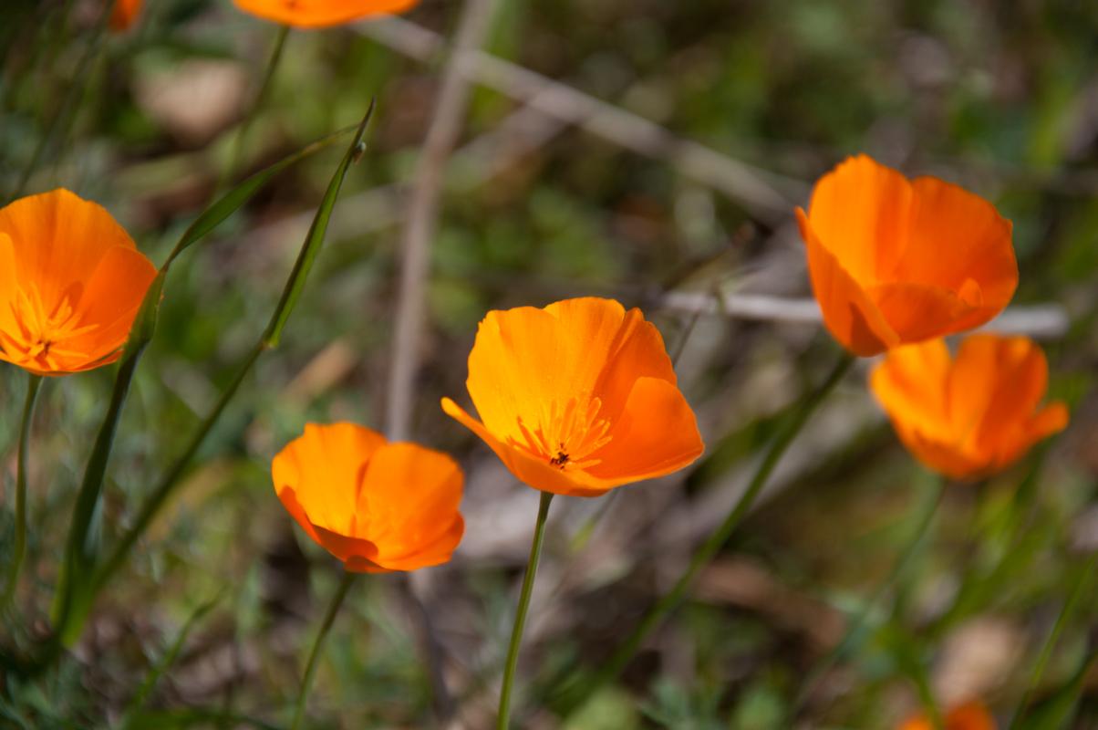 Journal-Keeping-Flowers-20.jpg