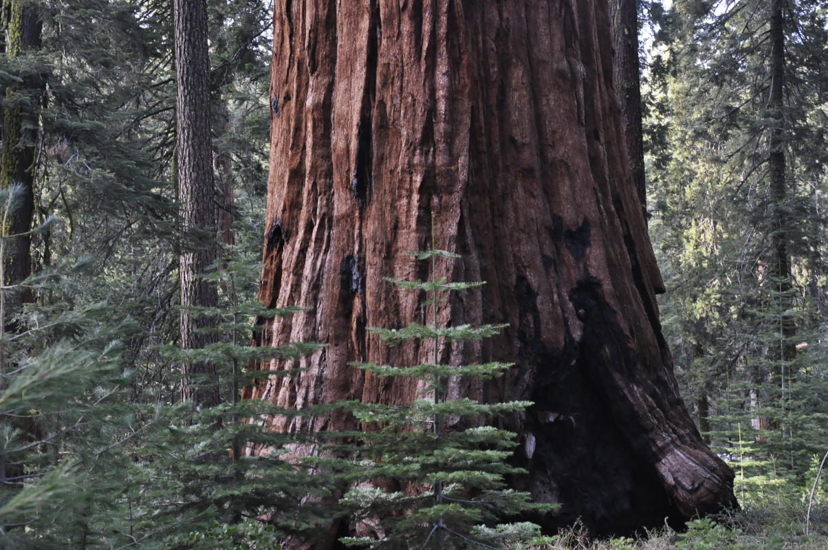 journal-keeping-Sequoia-learn