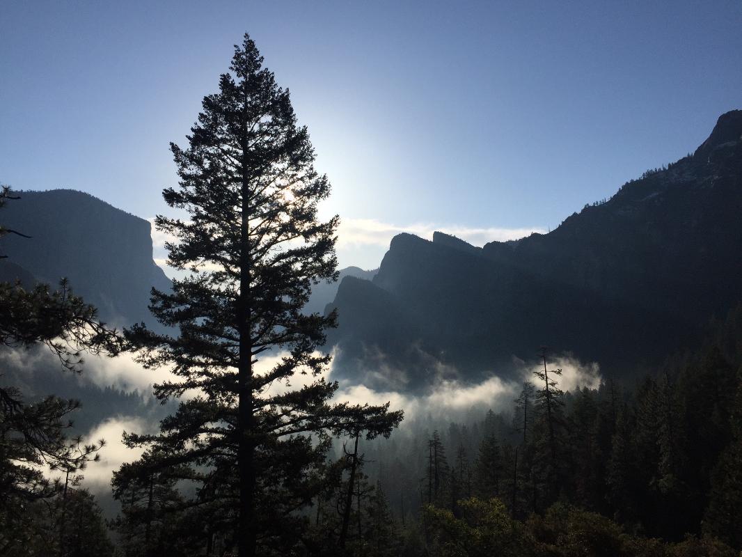 journal-keeping-tree-silhouette-yosemite-create