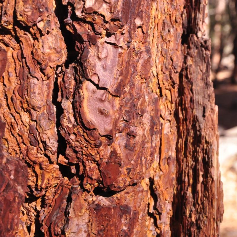 journal-keeping-closeup-pine-discover