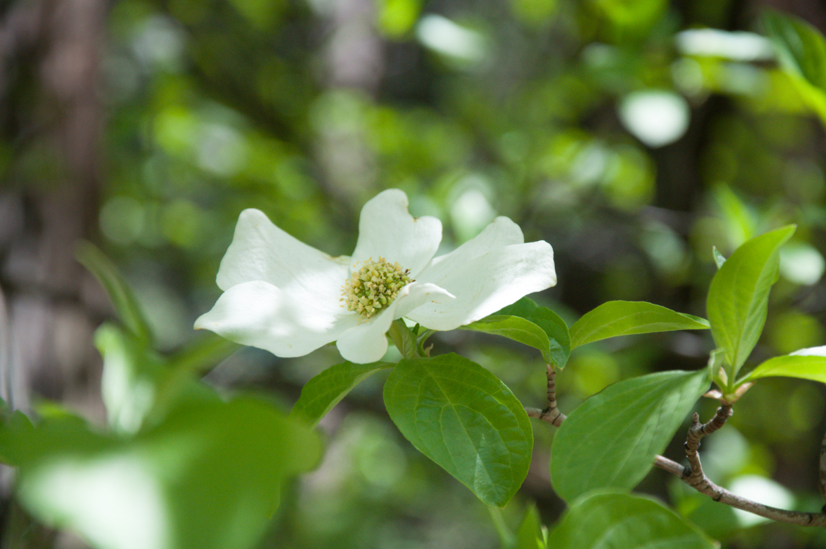 journal-keeping-dogwood-1