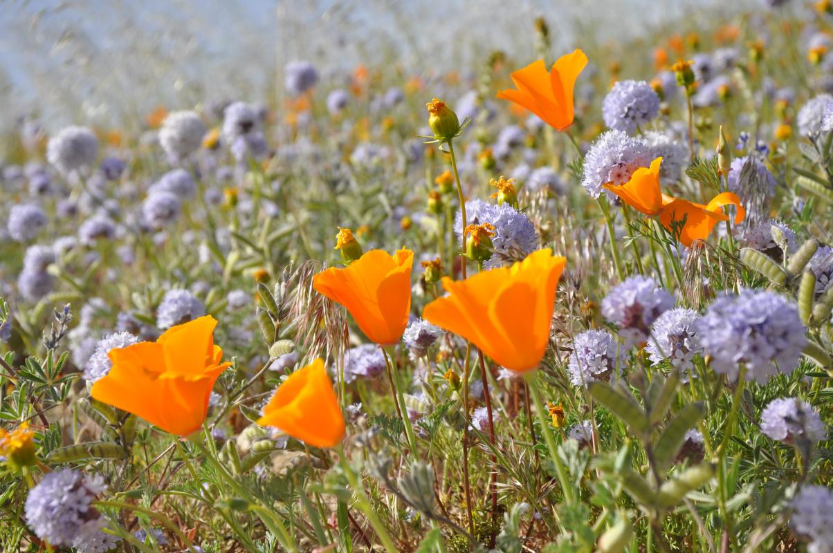 Journal-Keeping-Flowers-33.jpg
