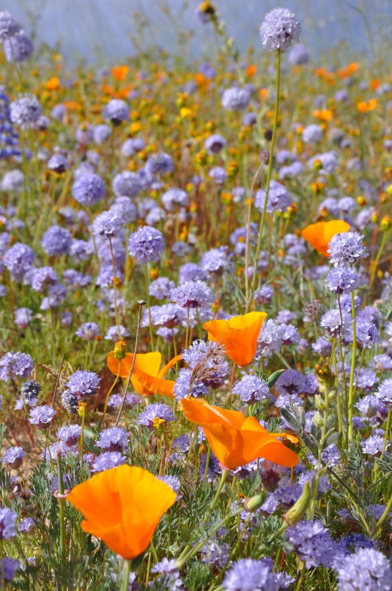 Journal-Keeping-Flowers-39.jpg