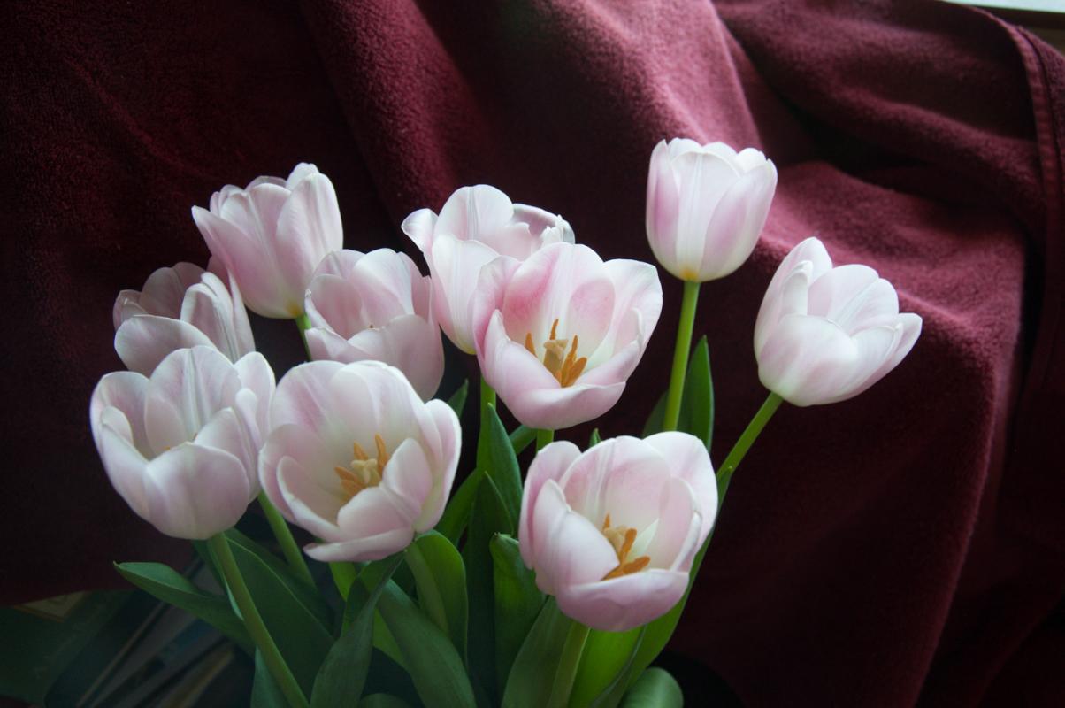 Journal-Keeping-Flowers-07.jpg