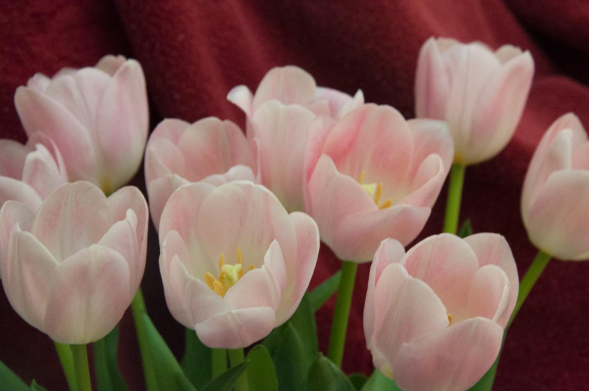 Journal-Keeping-Flowers-06.jpg