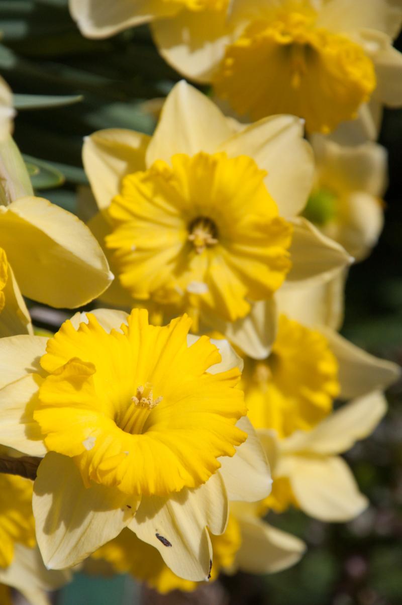 Journal-Keeping-Flowers-12.jpg