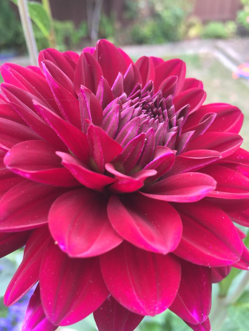 Journal-Keeping-Flowers-14.jpg