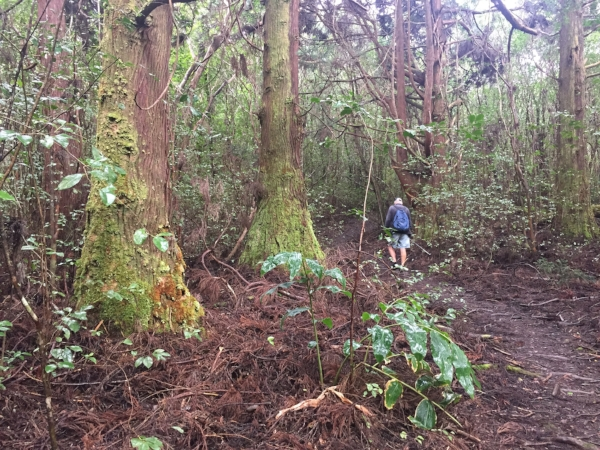 trees-Kulapuhi-trail.jpg