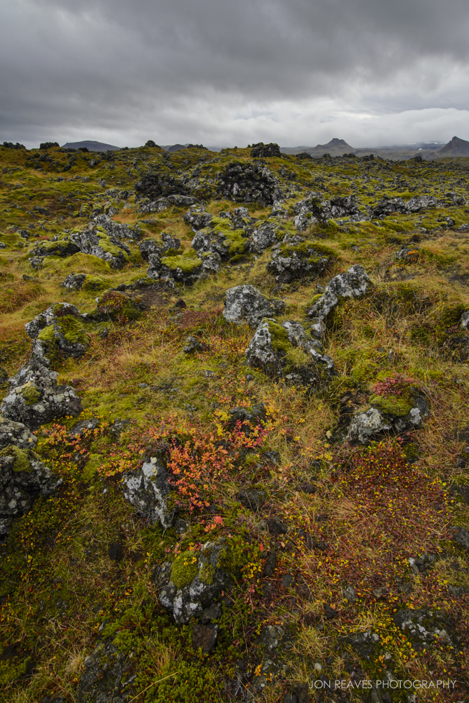 Mossy lava field covered in colorful shrubs, Snaefellsnes National Park