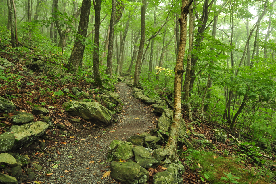 Thick forest and a well-maintained trail at Elk Knob State Park, North Carolina.