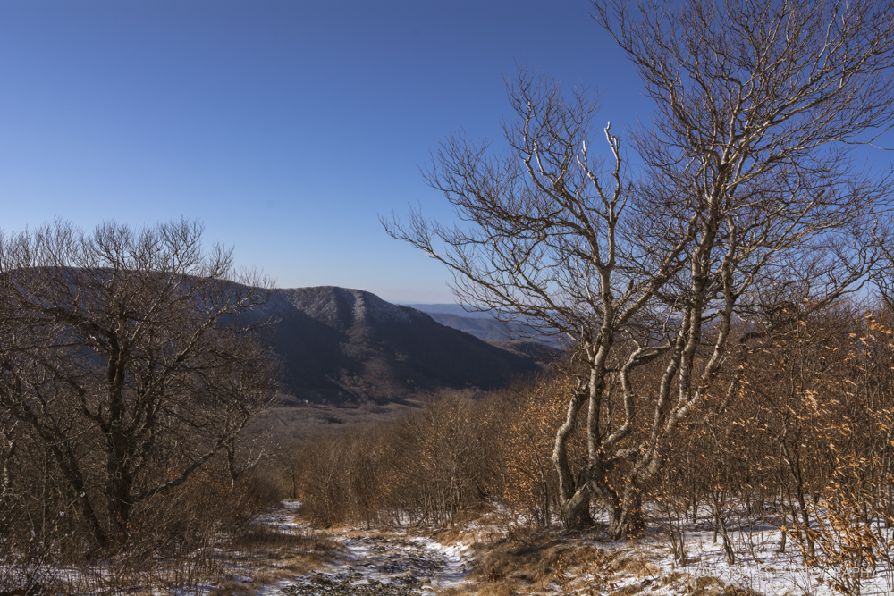 View near the summit of Elk Knob on a winter's day.