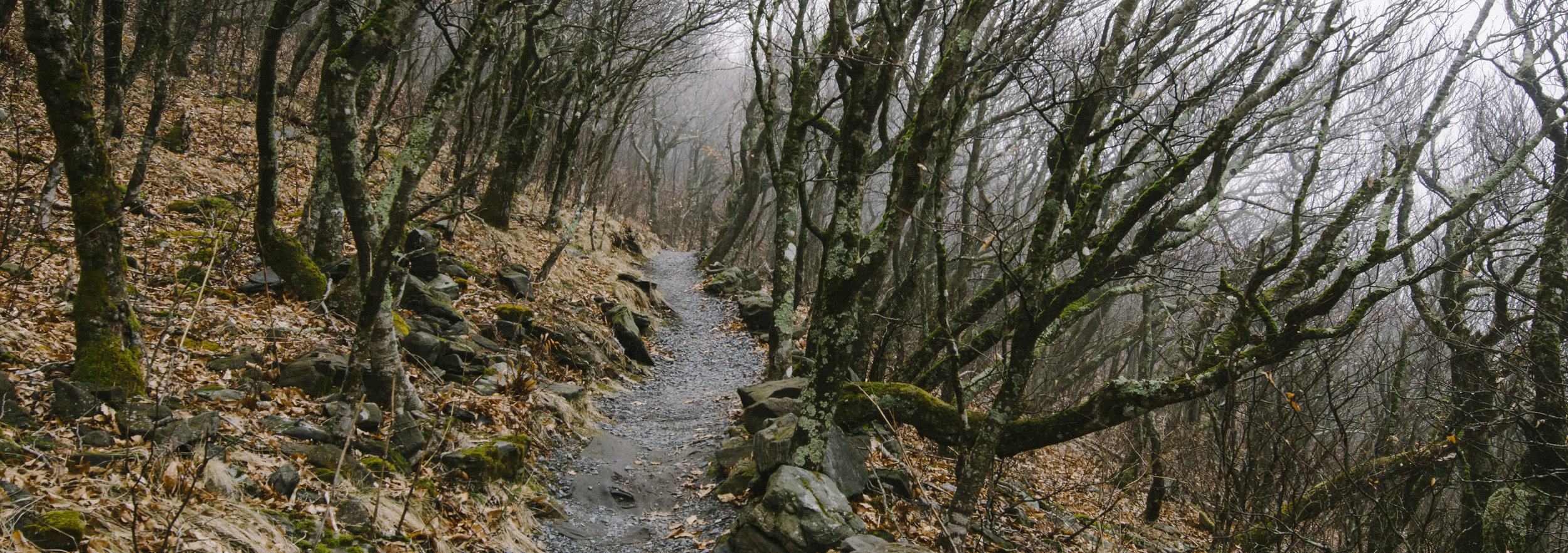 Near the summit of Elk Knob, the trees become scraggly and twisted as the trail narrows at 5,500 feet.