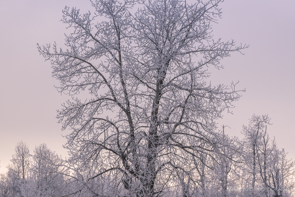 Hoar frost, Elk Island National Park (Nikon D750, 200-500mm VR - 200mm, ISO 500, f8, 1/800 sec)