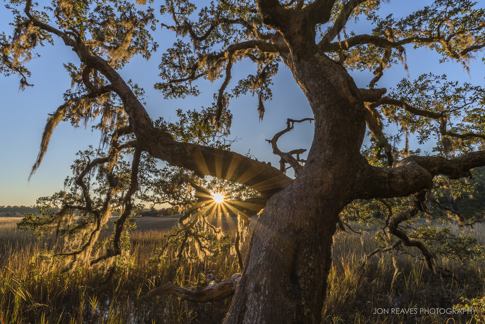 An old oak by the intracoastal marsh, near Little River, South Carolina. (18mm, f16, 1/40 sec, ISO 100, tripod)