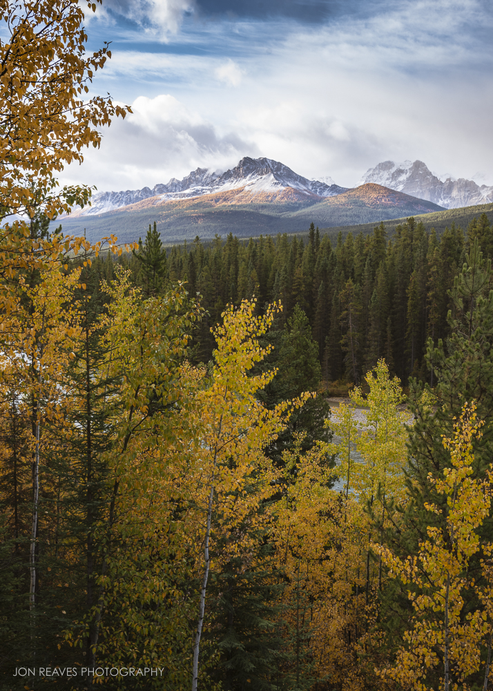 Autumn larches creeping up the mountains, Banff National Park