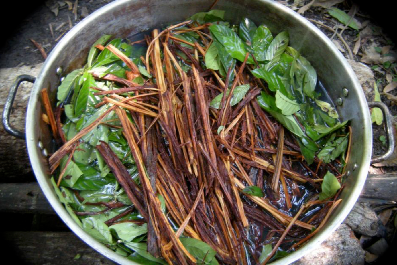 Ayahuasca. Photo Credit: Costa Rican News