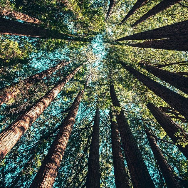 Summer bucket list🗓: Forest Bathing, or walking in nature and letting it fill your senses by paying attention to all of the different sights, sounds and smells🌿 • • • #summer #bucketlist #forestbathing #nature #naturewalk #trees