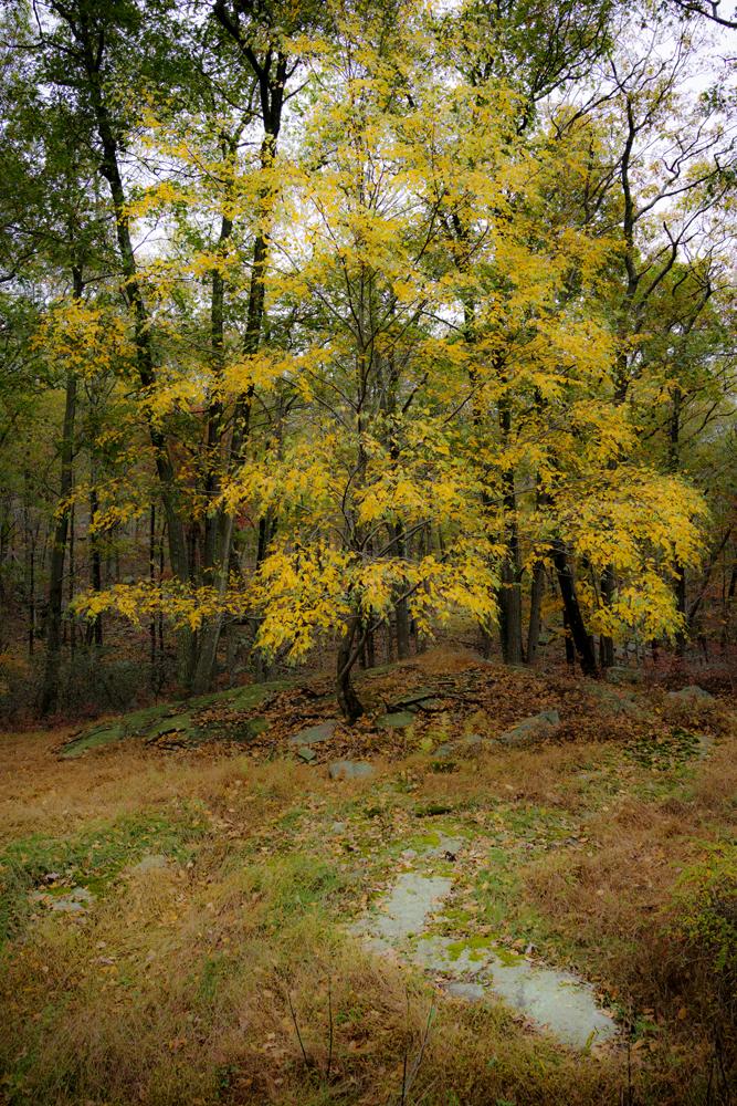 Harriman State Park Hike_007.jpg