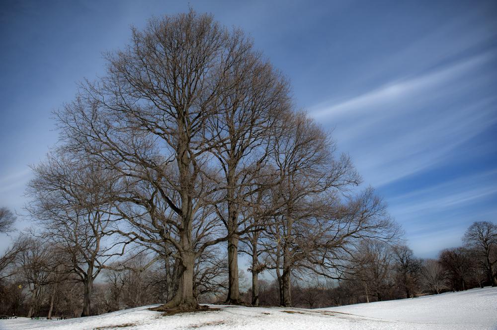 Prospect Park in Snow_026A.jpg