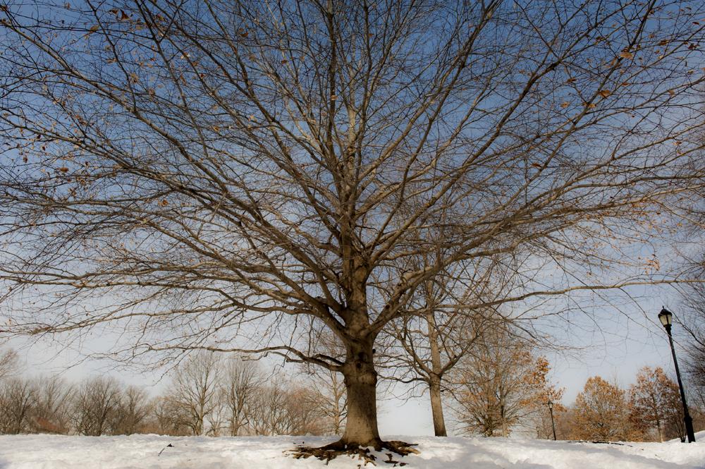 Prospect Park in Snow_035AA.jpg