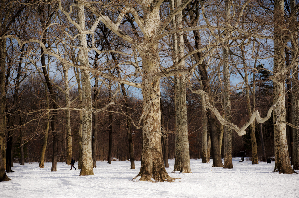 Prospect Park in Snow_084.jpg