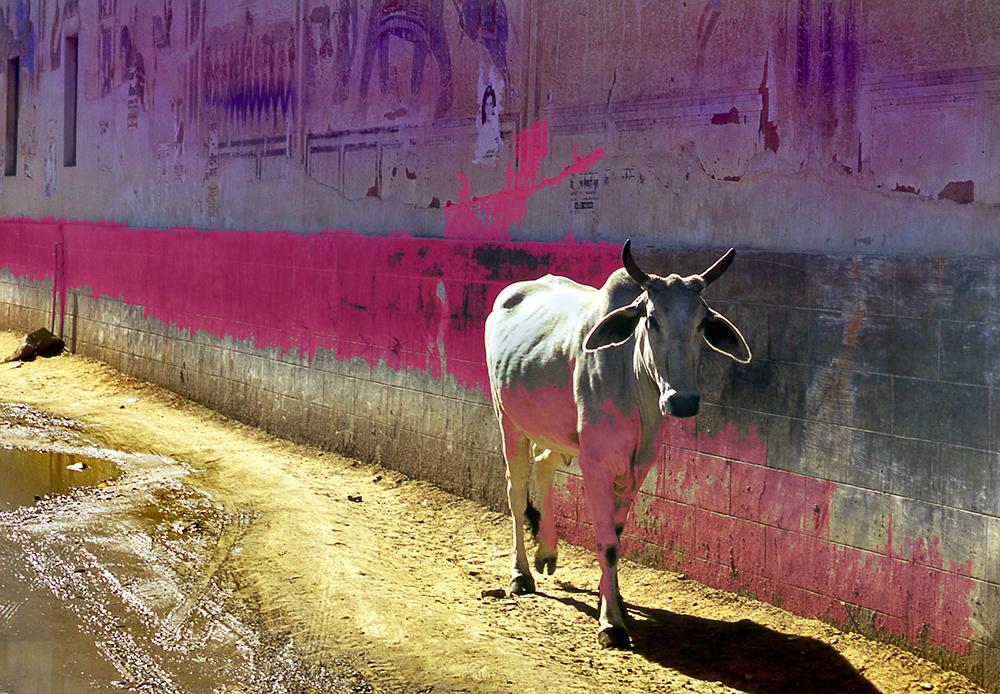 Painted cow copy.jpg