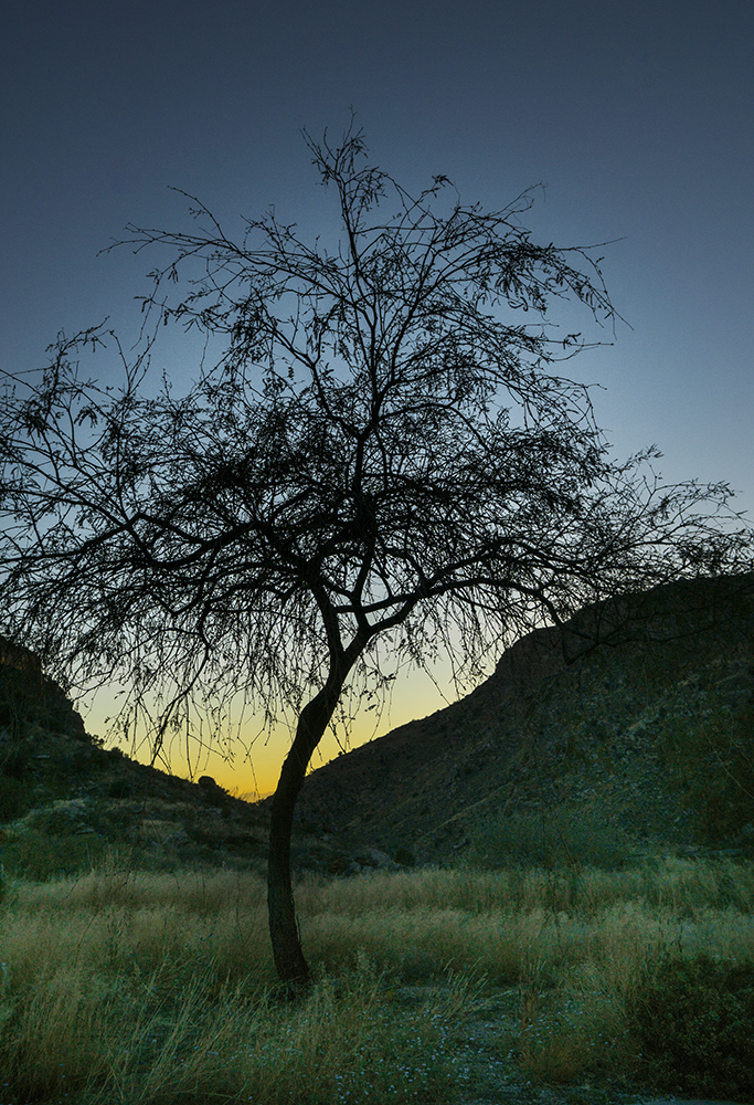 Arizona_0179 copy.jpg